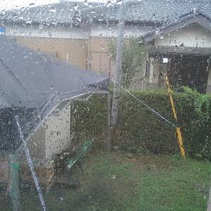 待ち望んだ雨ですが