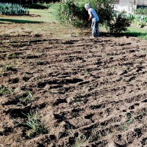 畑で耕運機作業