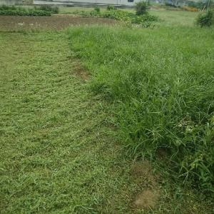 畑の草刈りで雨がポツリと