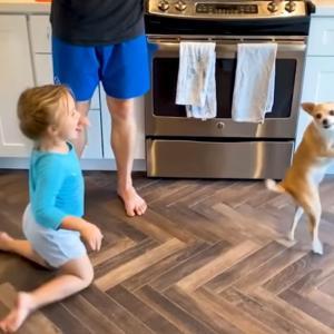 Best Pets of The Month: 2020年6月に癒やされた微笑ましい動物ビデオの総集編