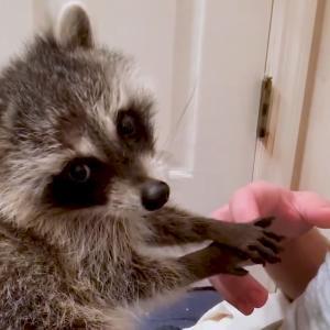 Best Pets of The Month: 2020年7月に癒やされた微笑ましい動物ビデオの総集編