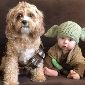 Baby Yoda and Chewbacca : 愛犬チューバッカとベイビーのヨーダ ! !