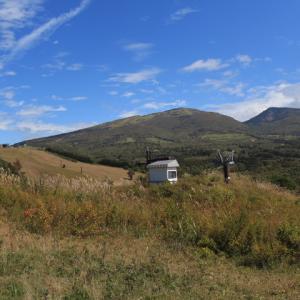 秋空の山野草