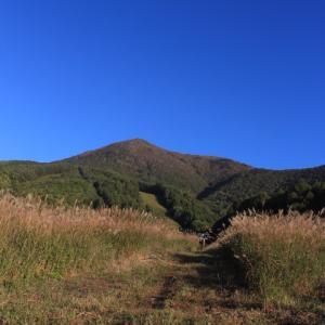 秋の名残り花~飯綱高原