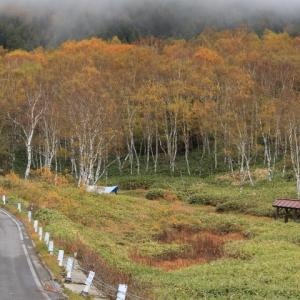 志賀高原平床の黄葉