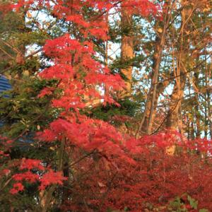 続山小屋の紅葉