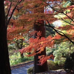 昌禅寺の紅葉最終回