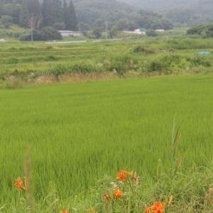 野の花散歩