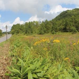 夏の終わりの志賀高原