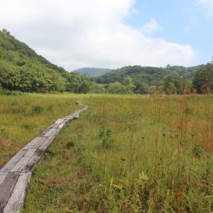 沼の原湿原~ミソハギ