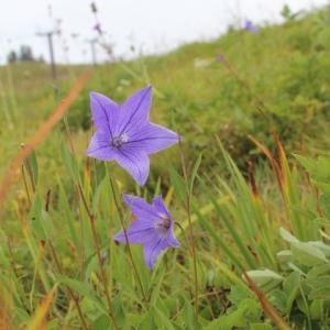 菅平高原秋の花