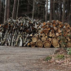 原木の調達