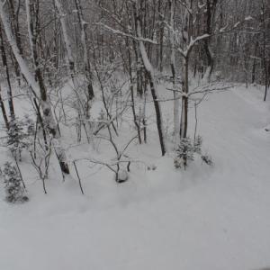 雪と自粛で閉塞感MAX