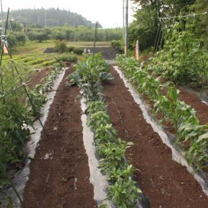 山小屋のスローライフはカフェと山野草と家庭菜園