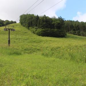 夏到来~高原のヤナギラン