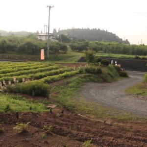 土と遊ぶ~家庭菜園