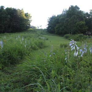 草原のお花畑