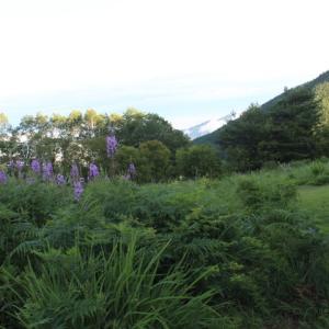高原のお花畑に沈没