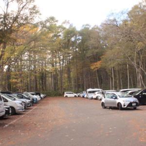 戸隠大峰自然休養林の紅葉