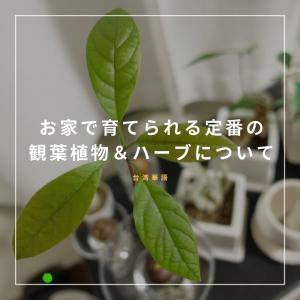【台湾華語】お家で育てられる定番の観葉植物&ハーブ