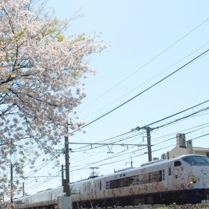 サクラと阪和線