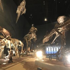 神奈川県立生命の星・地球博物館に行ってきました!