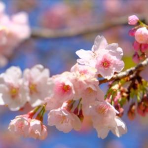 『ドラゴン桜』のメッセージ