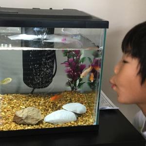 Gold fish 〜金魚に癒される〜