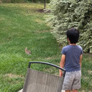 The bunny comming 〜うさぎが庭に〜