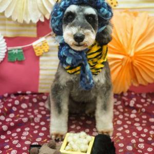 我が家のリーダーは犬!? シュナウザーのダーちゃん❤6歳の誕生日を迎える