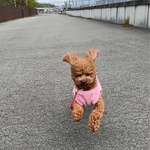 走る〜!走る〜!俺たち♫