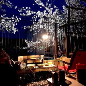 桜の季節の恒例行事 ~ 庭Q ~