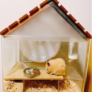 【100均グッズで簡単DIY】おしゃれなハムスターのおうち、地下型巣箱風