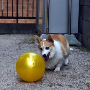 庭でボール遊び!