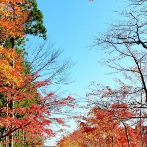 秋の始まりに