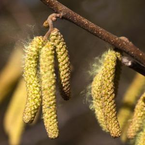 子供のアレルギー検査!花粉症を未然に防ぐ為にも知っておきたい3項目!