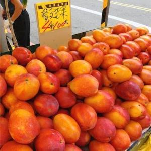 台北・東門駅の果物やさんで旬のマンゴーを食べ比べ!