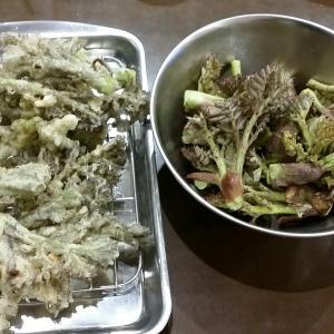 夕飯にタラの芽レシピ