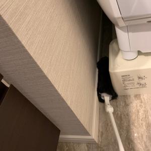 【洗濯機まわり】の埃取り