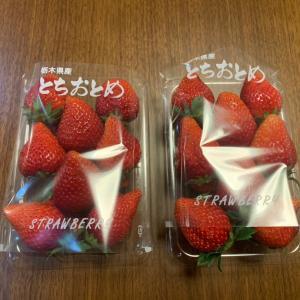 いちご苺イチゴ祭りの冷蔵庫+キープキレイ