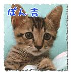 猫田ぽん吉 14才