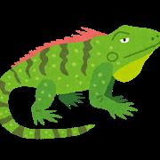 【画像多数】爬虫類は懐かないっていうヤツ、これでもそう言えるの?