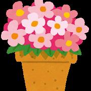【キンギョソウ】よく咲いてくれる花ベスト1!