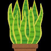 【ブーム】サンスベリアとかいう、 昔流行ったのに意外と知らないガーデナーもいる観葉植物