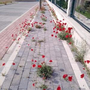 【イタリア】 ロックダウンで誰も出歩かなくなった結果、歩道に花が咲き乱れる