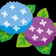 【激怒】紫陽花の葉っぱは毒なのに料理屋とかで使われてるのは何なの?無知なの?毎年中毒事件起きてるんだけど!
