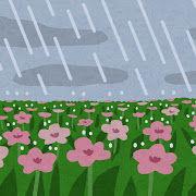 【スイカ】この長雨で収穫してもマズいわ枯れるわで今年は早くも終了だわ