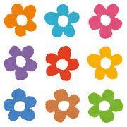 【ブッドレア】花色によって蝶の誘引率が変わるってほんとうなのか