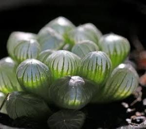 【急募】多肉植物に自信ニキ