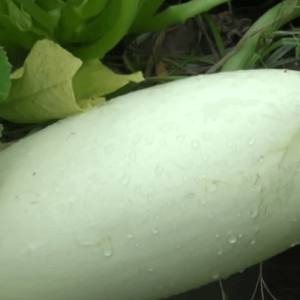 中国謎種子を植え育ててみた結果!「すごい速さで狂ったように成長していったんです」なおその植物が何なのかは未だ謎なもよう・・・